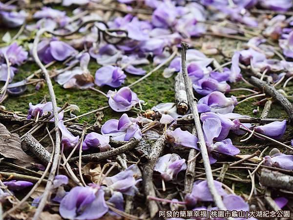 大湖紀念公園08-湖畔邊的紫藤落花.JPG