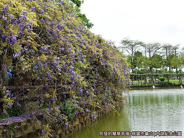 大湖紀念公園09-紫藤花與湖畔.JPG