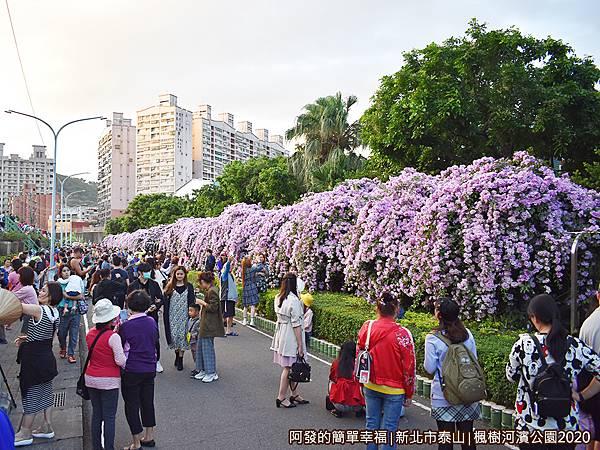 2020楓樹河濱公園05-〝蒜香藤花道〞約兩百公尺長.JPG