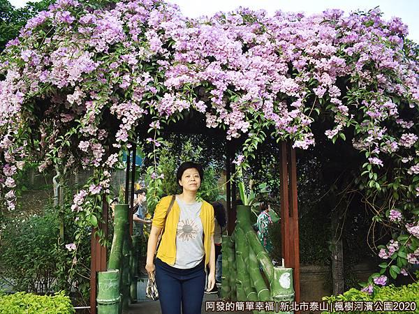 2020楓樹河濱公園07-小拱橋與蒜香藤.JPG