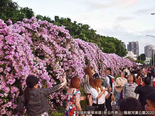 2020楓樹河濱公園11-如紫色花海瀑布般.JPG
