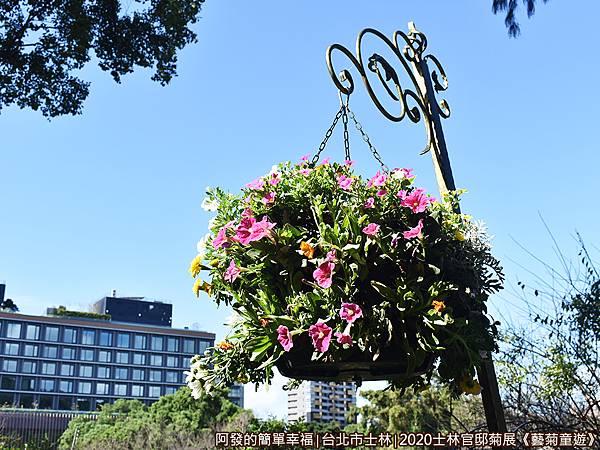 士林官邸菊展藝菊童遊15-園區內步道兩側的吊掛花飾.JPG