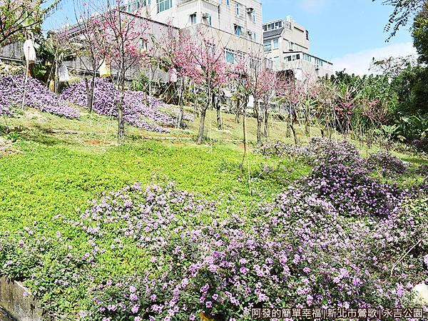 永吉公園22-紫色花海小山坡.JPG