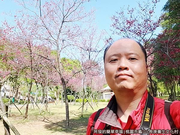 長庚養生文化村08-第二停車場旁的小型櫻花林留影.jpg