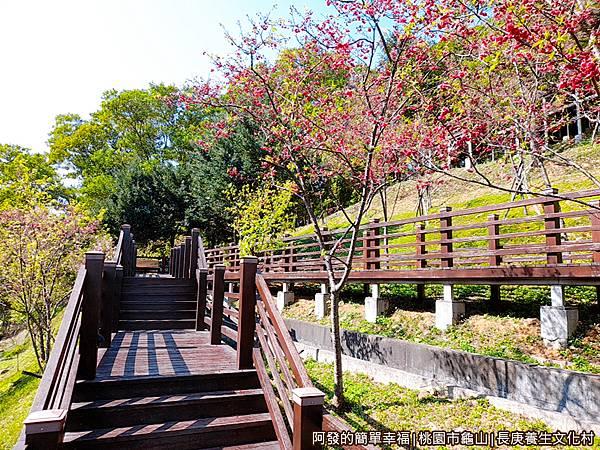 長庚養生文化村18-別有風味的櫻花木棧道階梯.jpg