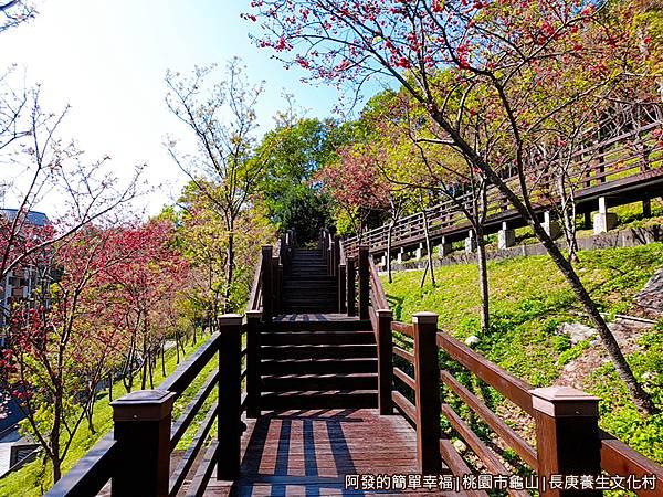 長庚養生文化村16-木棧道兩旁種植整排的八重櫻.jpg