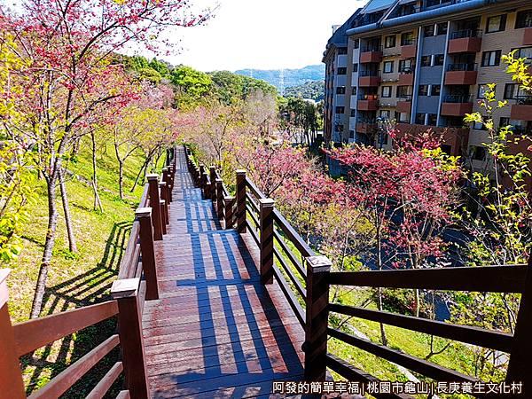 長庚養生文化村19-美麗的櫻花木棧步道.jpg