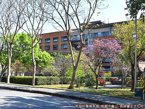 長庚養生文化村02-園區房舍前櫻花樹.JPG