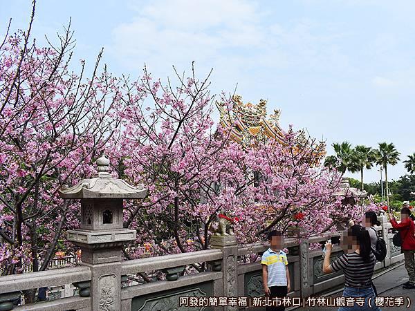 竹林山觀音寺05-廟埕正門牌樓兩側盛開的吉野櫻.JPG