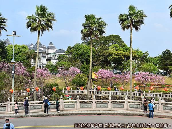 竹林山觀音寺09-對面公園中整排的吉野櫻盛開.JPG