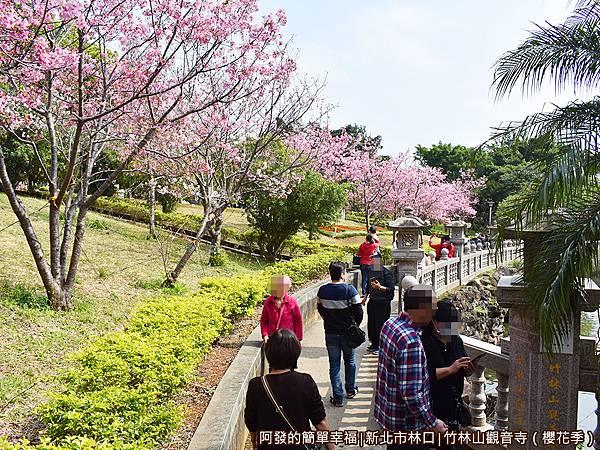 竹林山觀音寺15-池畔與櫻花道.JPG