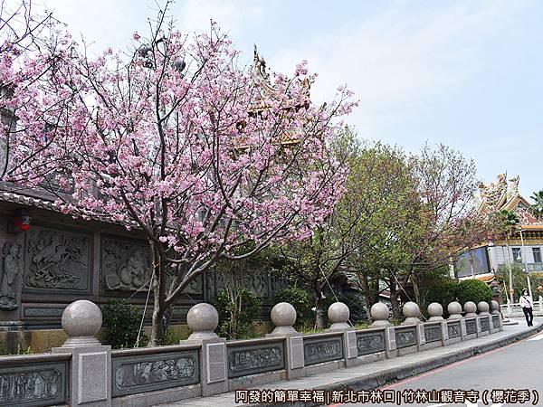 竹林山觀音寺03-人行道上盛開的吉野櫻.JPG