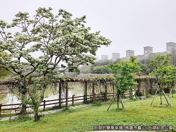 大湖紀念公園02-流蘇.jpg
