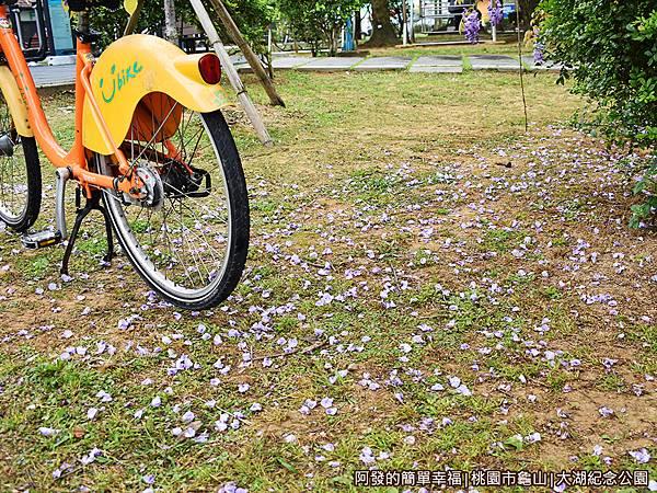 大湖紀念公園13-草皮上的紫藤花落葉.JPG