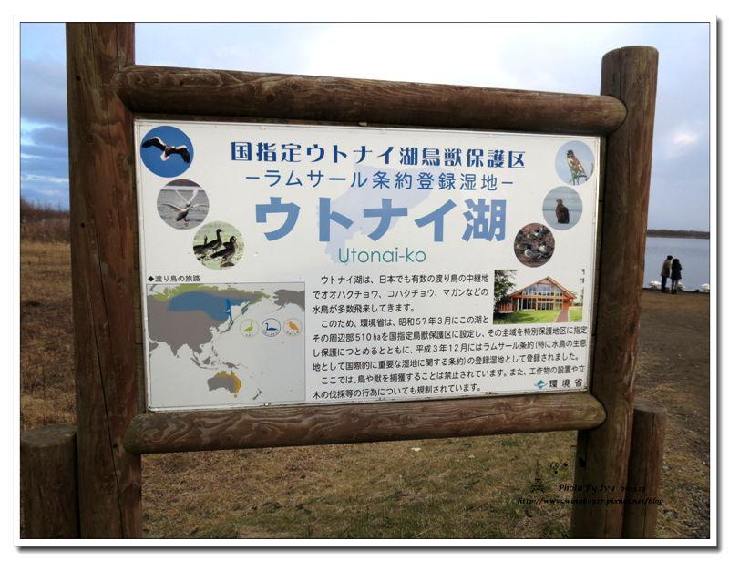 1021208~北海道《天鵝湖》