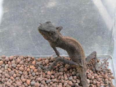 lizard02.jpg