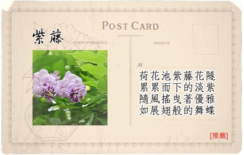 Travel Guide台北植物園-08紫藤