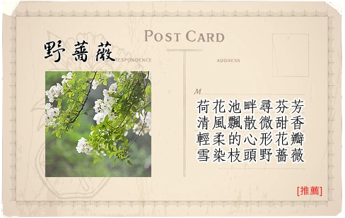 Travel Guide台北植物園-09野薔薇