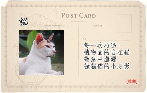Travel Guide台北植物園-12貓