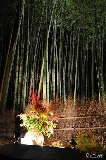 嵐山花燈路-竹林之道11.jpg
