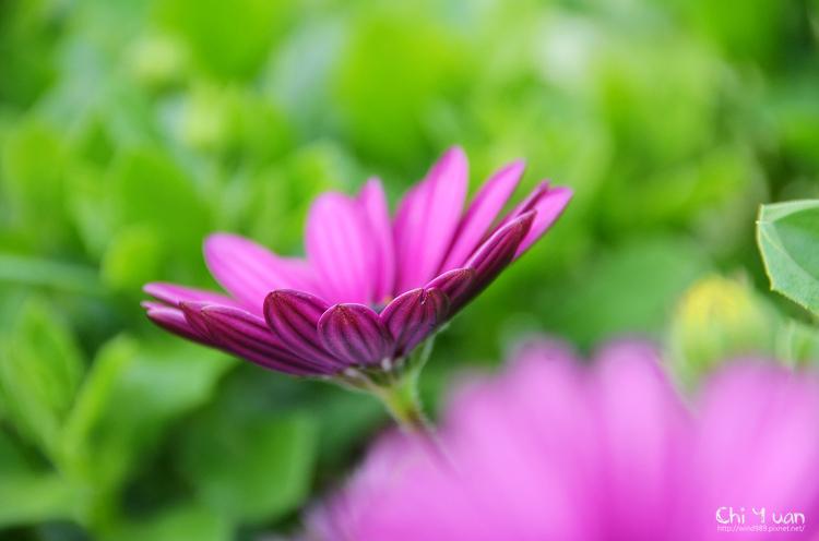 2014-2015台北花卉展23.jpg