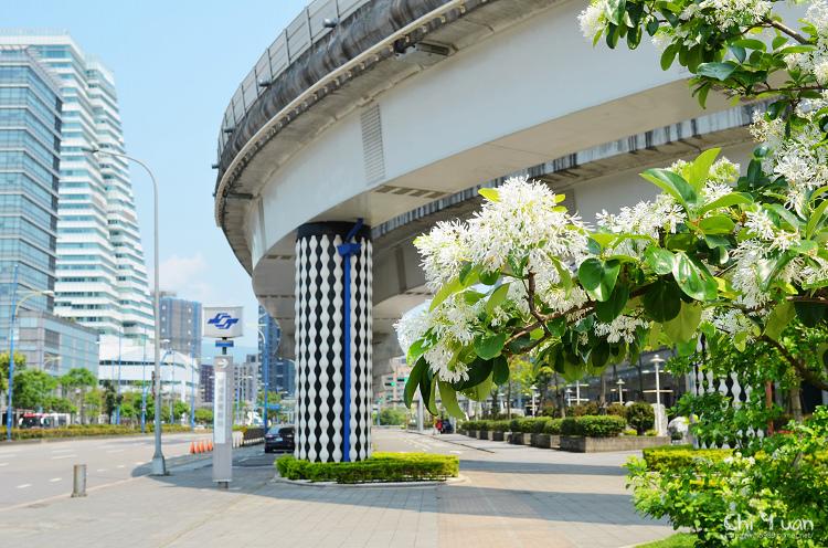 南港展覽館站流蘇02.jpg
