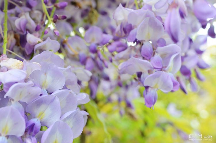 淡水紫藤咖啡館17.jpg