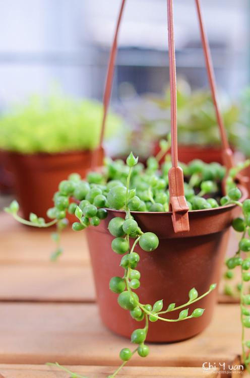 2012多肉植物01.jpg