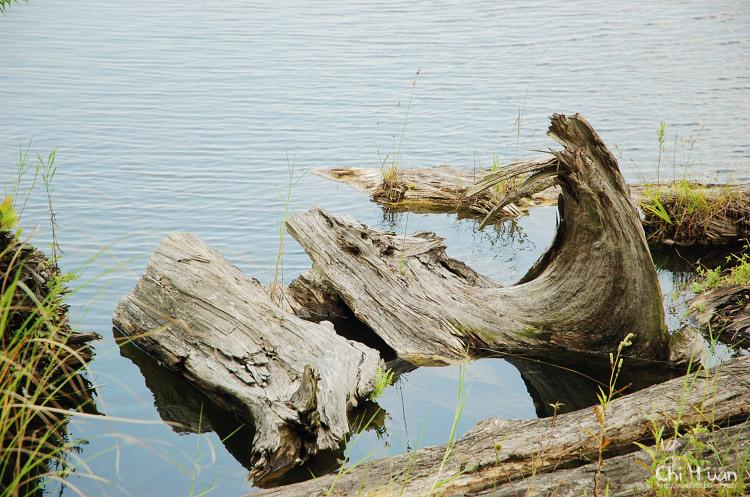 羅東林業文化園區-貯木池11.jpg