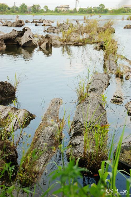 羅東林業文化園區-貯木池15.jpg