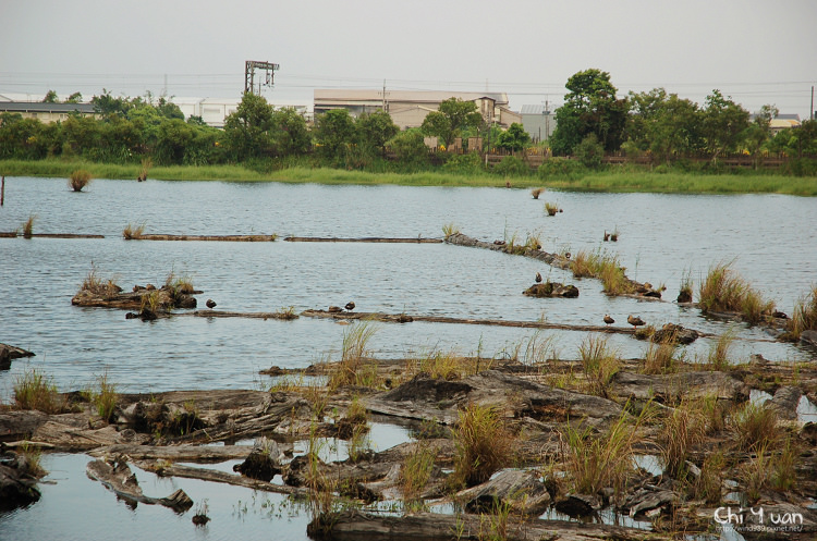 羅東林業文化園區-貯木池17.jpg