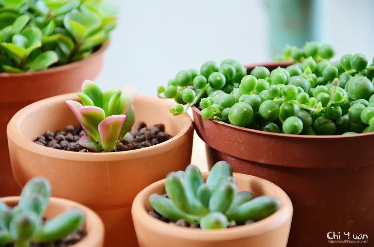 多肉植物秘密花園07.jpg