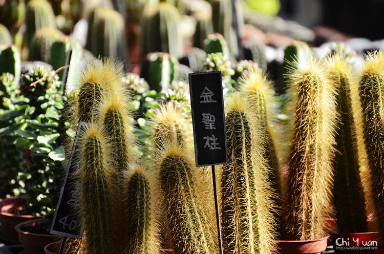 台北花卉村-多肉植物10.jpg