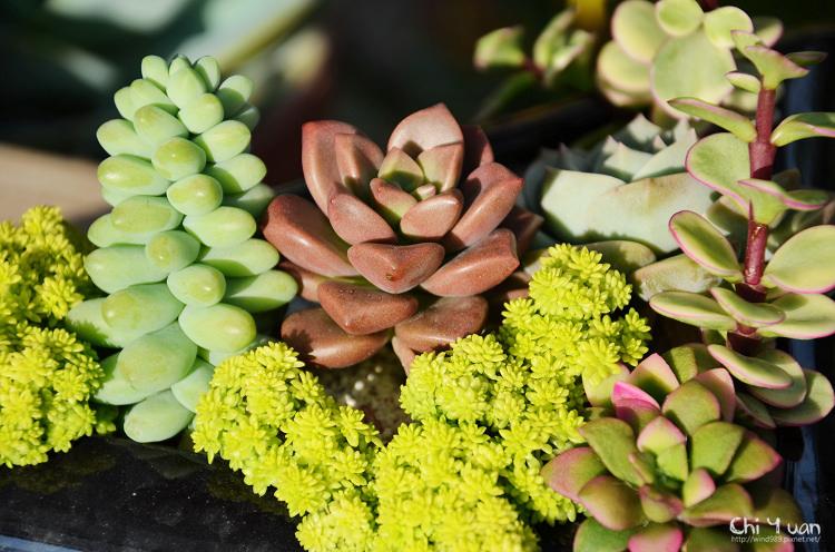 台北花卉村-多肉植物18.jpg