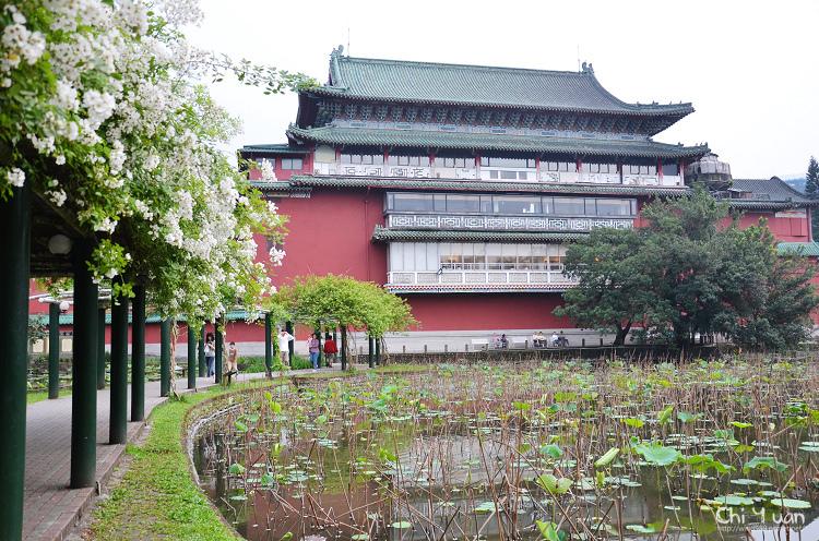 植物園野薔薇02.jpg