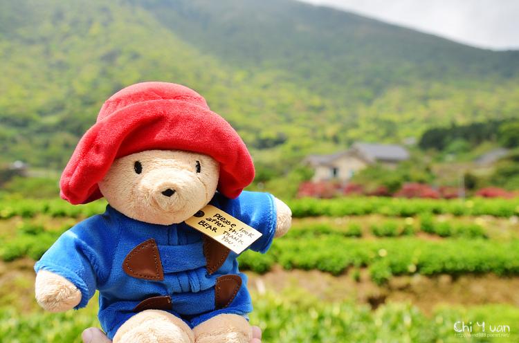 2012竹子湖海芋季24.jpg