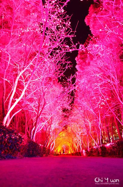 九族文化村櫻花祭02.jpg