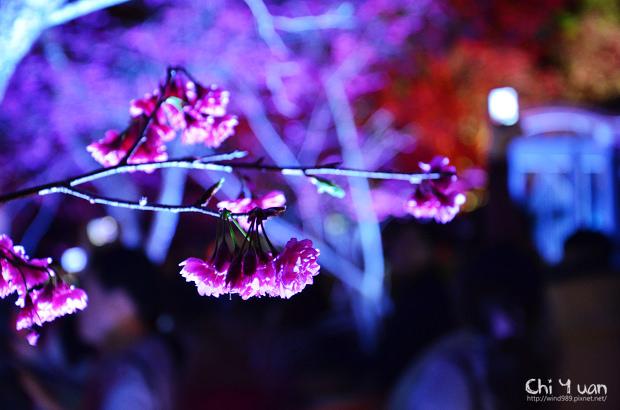 九族文化村櫻花祭10.jpg