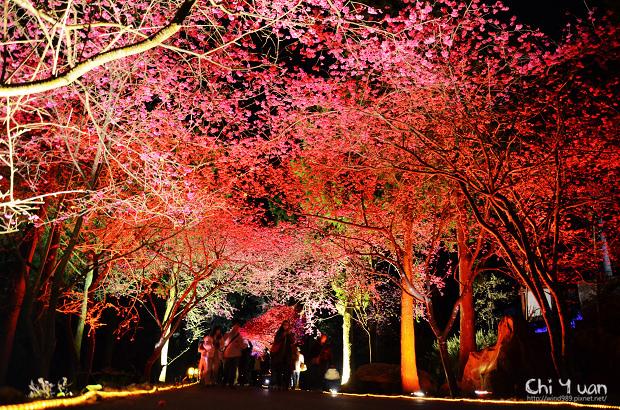 九族文化村櫻花祭16.jpg