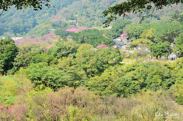 2012陽明山花季03.jpg