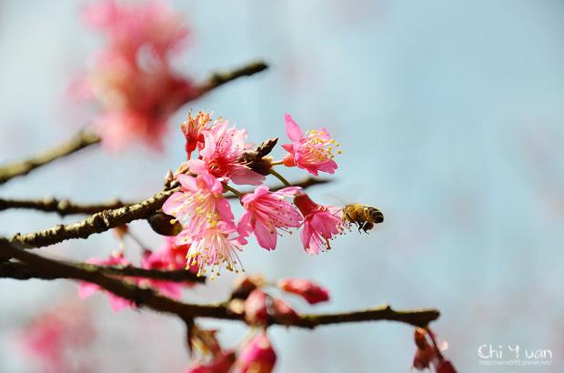 2012陽明山花季07.jpg