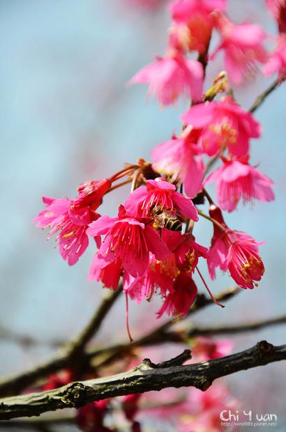 2012陽明山花季08.jpg