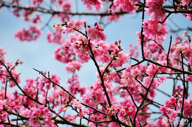 2012陽明山花季10.jpg