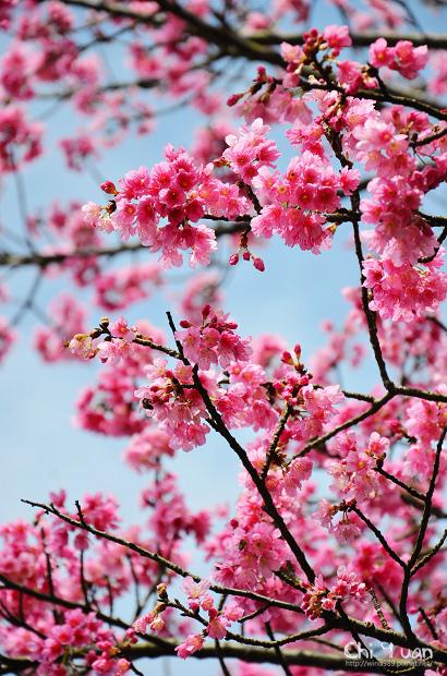 2012陽明山花季11.jpg