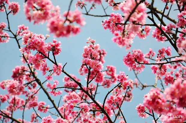 2012陽明山花季14.jpg