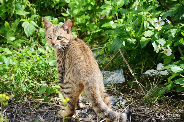 Cat漫步虎班00.jpg