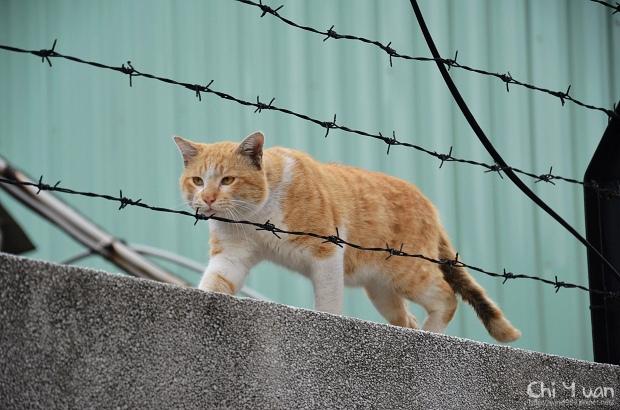 如走鋼索的貓咪01.jpg