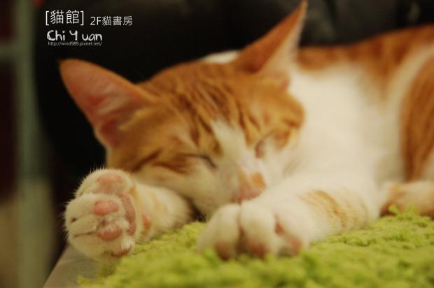 團團睡04.jpg