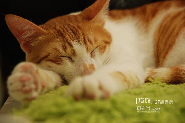 團團睡05.jpg