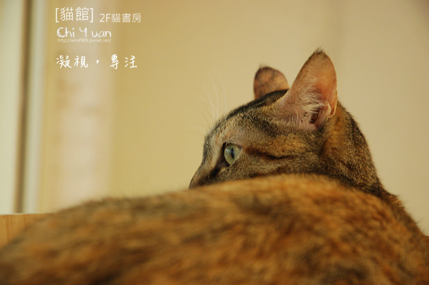 貓書房微笑02.jpg